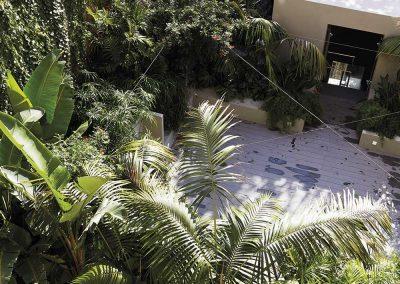 Buscando la imagen del paraíso perdido se incorporan plantas de gran porte, palmeras y hojas de verde intenso