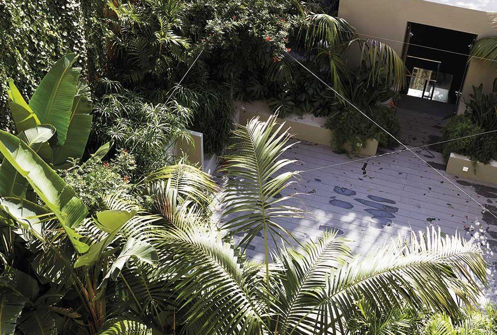 Un jardín tropical en medio del barrio industrial de Poblenou